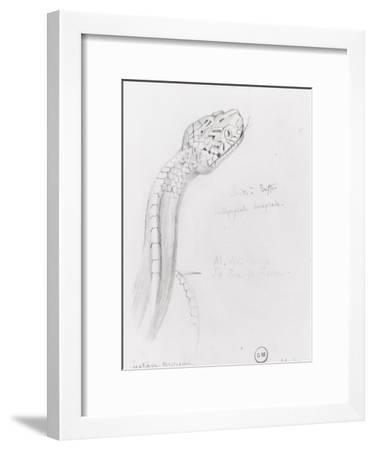 Etude de serpent pour Hercule et l'hydre de Lerne-Gustave Moreau-Framed Giclee Print