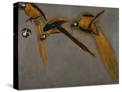 Trois perroquets aras et une tête-Pieter Boel-Stretched Canvas Print