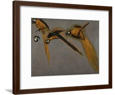 Trois perroquets aras et une tête-Pieter Boel-Framed Giclee Print