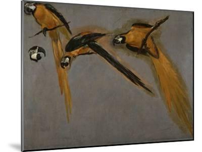 Trois perroquets aras et une tête-Pieter Boel-Mounted Giclee Print