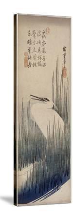 Héron blanc dans les roseaux-Ando Hiroshige-Stretched Canvas Print