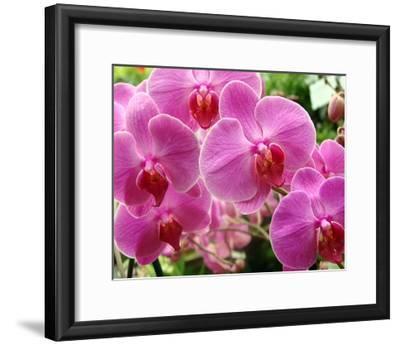 A Orchids I-Ricki Mountain-Framed Giclee Print