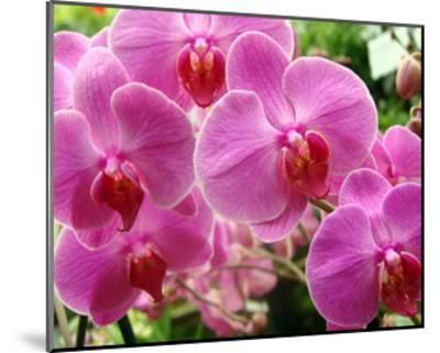 A Orchids I-Ricki Mountain-Mounted Giclee Print
