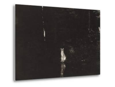 A Lynx Photographed at Night by Wildlife Photographer George Shiras-George Shiras-Metal Print