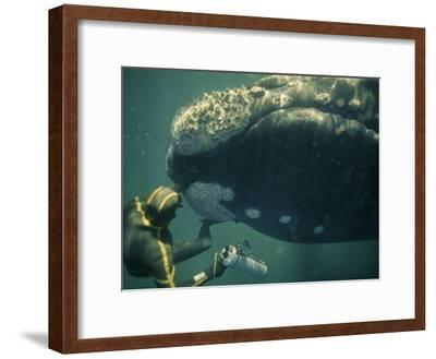 A Movie Photographer Keeps His Camera Out of the Way of a Right Whale-Bill Curtsinger-Framed Photographic Print
