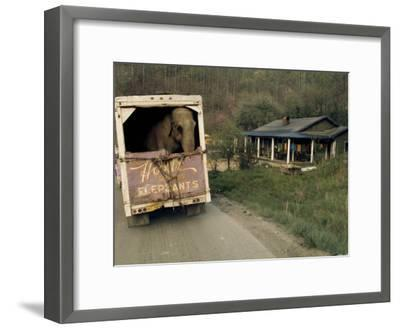 An Elephant Rides to the Next Show in the Back of a Circus Truck-Jonathan Blair-Framed Photographic Print