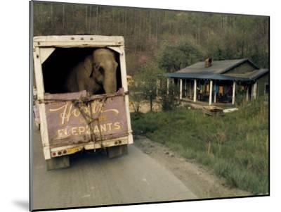 An Elephant Rides to the Next Show in the Back of a Circus Truck-Jonathan Blair-Mounted Photographic Print