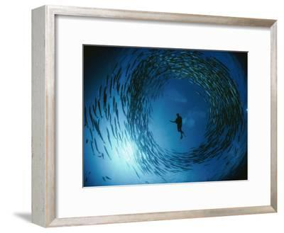 A Naturalist Is Ringed by a Group of Rotating Barracuda-David Doubilet-Framed Photographic Print