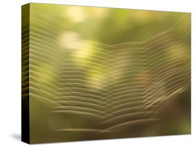 Backlit View of Part of a Spider Web-Phil Schermeister-Stretched Canvas Print
