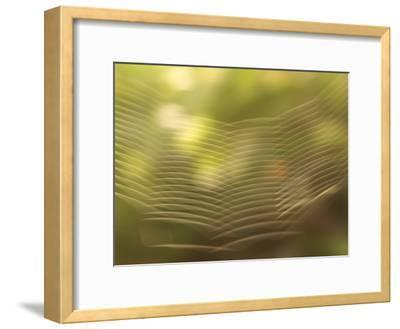 Backlit View of Part of a Spider Web-Phil Schermeister-Framed Photographic Print