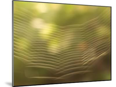 Backlit View of Part of a Spider Web-Phil Schermeister-Mounted Photographic Print