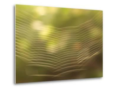 Backlit View of Part of a Spider Web-Phil Schermeister-Metal Print