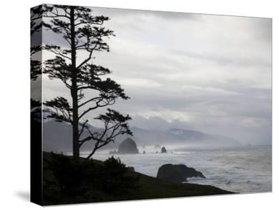 Silhouette of a Tree with the Rocky Oregon Coast in the Background-Michael Hanson-Stretched Canvas Print