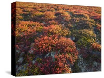 Autumn-Hued Tundra of Kronotsky Nature Reserve-Michael Melford-Stretched Canvas Print