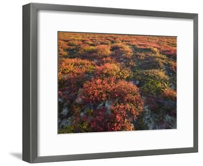 Autumn-Hued Tundra of Kronotsky Nature Reserve-Michael Melford-Framed Photographic Print