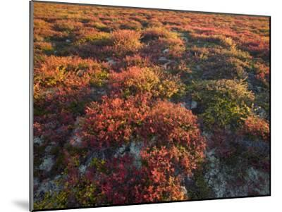 Autumn-Hued Tundra of Kronotsky Nature Reserve-Michael Melford-Mounted Photographic Print