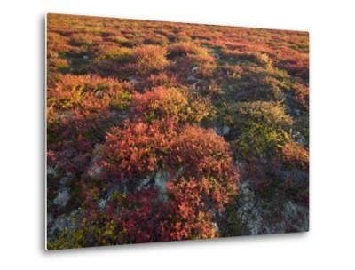 Autumn-Hued Tundra of Kronotsky Nature Reserve-Michael Melford-Metal Print