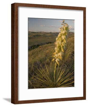 A Yucca Plant Grows on the Little Missouri National Grasslands-Phil Schermeister-Framed Photographic Print
