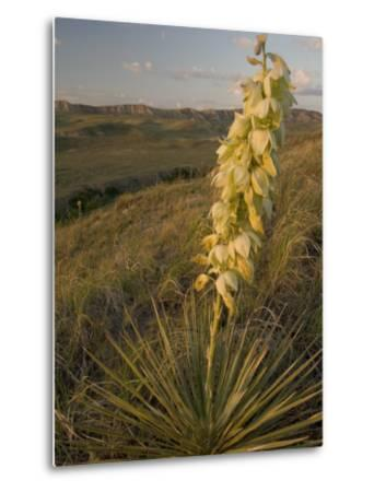 A Yucca Plant Grows on the Little Missouri National Grasslands-Phil Schermeister-Metal Print