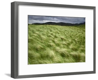 Marram Beach Grass Blowing on the Coast of the Isle of Lewis-Jim Richardson-Framed Photographic Print
