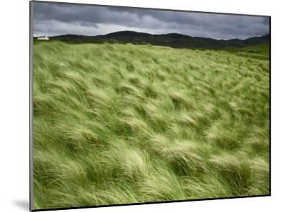 Marram Beach Grass Blowing on the Coast of the Isle of Lewis-Jim Richardson-Mounted Photographic Print