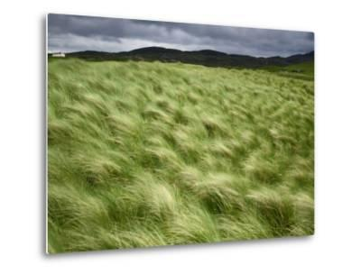 Marram Beach Grass Blowing on the Coast of the Isle of Lewis-Jim Richardson-Metal Print