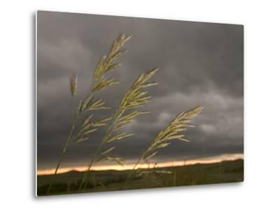 Prairie Wedge Grass Stands Out Against Thunderclouds in Grasslands-Phil Schermeister-Metal Print