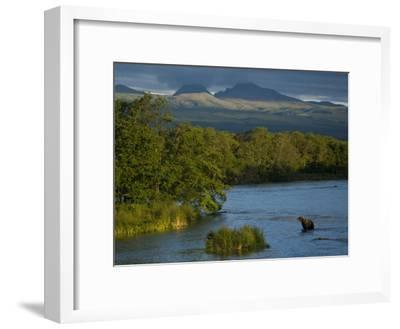 A Brown Bear Wading in a River in the Kronotsky Nature Reserve-Michael Melford-Framed Photographic Print