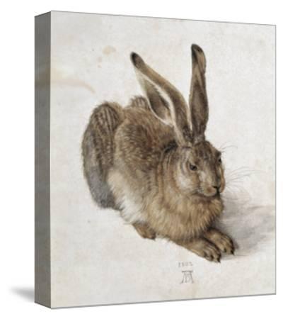 Hare-Albrecht D?rer-Stretched Canvas Print