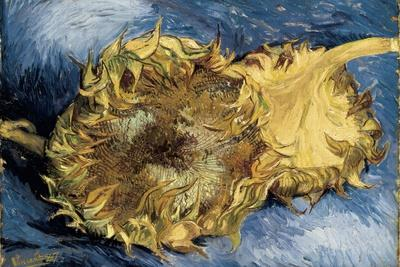 Sunflowers-Vincent van Gogh-Stretched Canvas Print