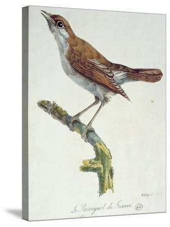 The Nightingale of France, C.1830-Paul Louis Oudart-Stretched Canvas Print