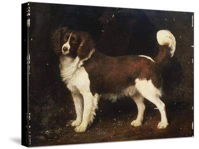 A Spaniel in a Landscape, 1784-George Stubbs-Stretched Canvas Print