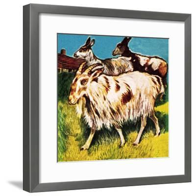 A Herd or Tribe of Goats-English School-Framed Giclee Print