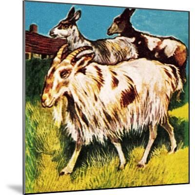 A Herd or Tribe of Goats-English School-Mounted Giclee Print