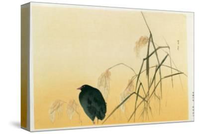 Blackbird, Edo Period-Japanese School-Stretched Canvas Print
