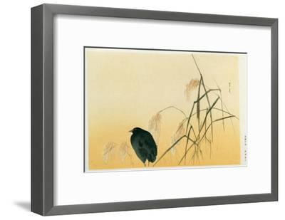 Blackbird, Edo Period-Japanese School-Framed Giclee Print