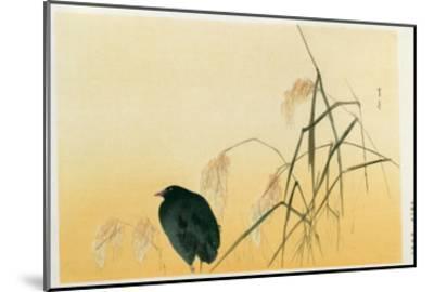 Blackbird, Edo Period-Japanese School-Mounted Giclee Print