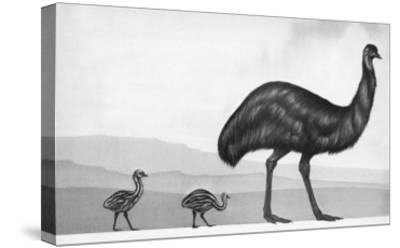 An Emu with Her Chicks-English School-Stretched Canvas Print