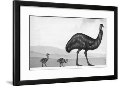 An Emu with Her Chicks-English School-Framed Giclee Print