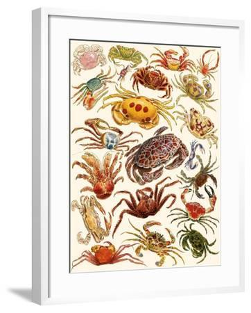 Crabs-English School-Framed Giclee Print