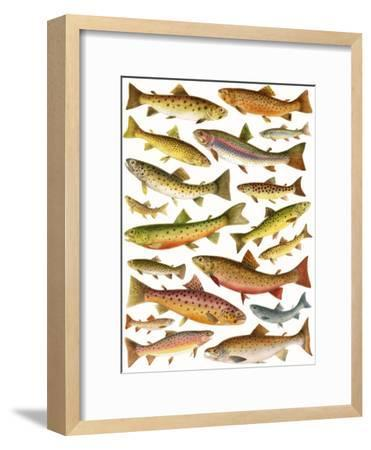 Trout-English School-Framed Giclee Print