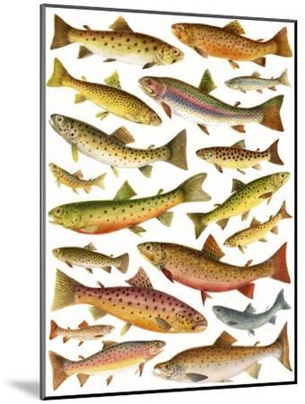 Trout-English School-Mounted Giclee Print