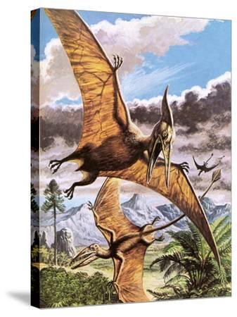 Pteranodon-Payne-Stretched Canvas Print