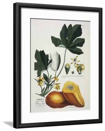 Papaya-Georg Dionysius Ehret-Framed Giclee Print