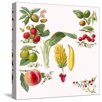 Fruits-English School-Stretched Canvas Print