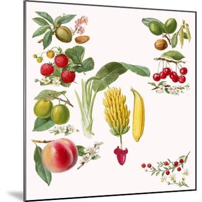 Fruits-English School-Mounted Giclee Print