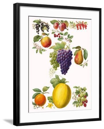 Fruits-English School-Framed Giclee Print