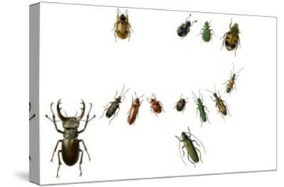 Beetles-English School-Stretched Canvas Print