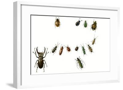 Beetles-English School-Framed Giclee Print