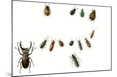 Beetles-English School-Mounted Giclee Print